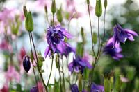 季節の花~その2~