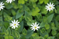 季節の花~その3~
