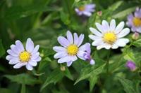 季節の花~その4~