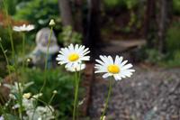 季節の花~その5~