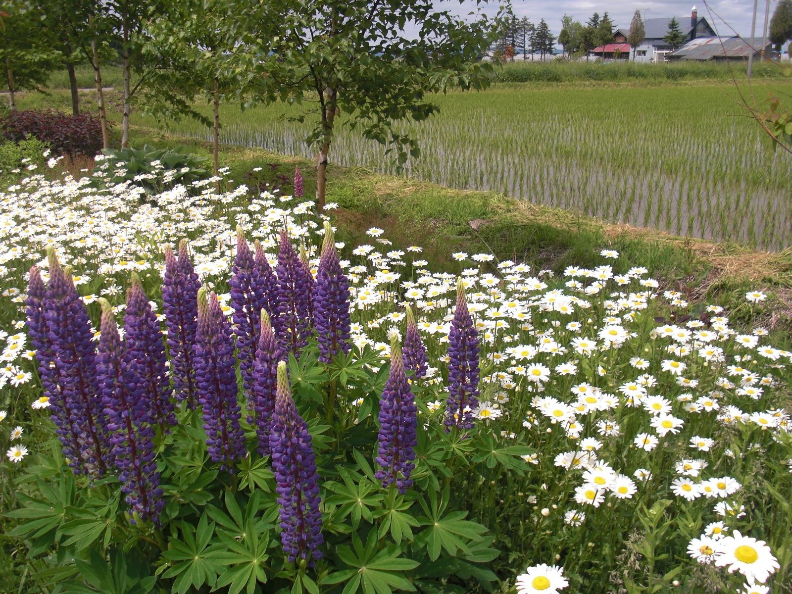 季節の花 その7
